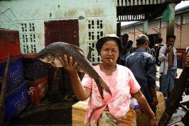 myanmar burma yangon rangoon fish market