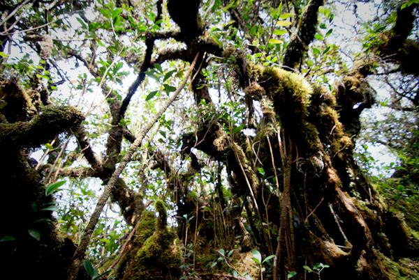 Cameron Highlands Jungle