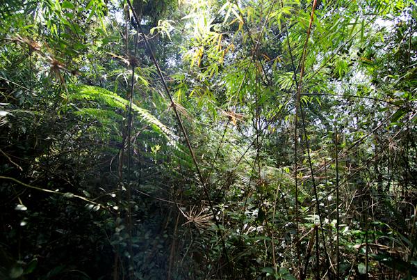 Cameron Highlands Moss Forest