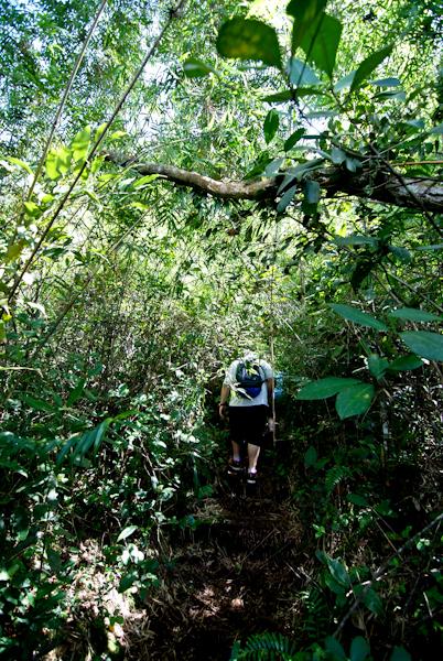 Mossy Forest Tour - Ben Walks Ahead