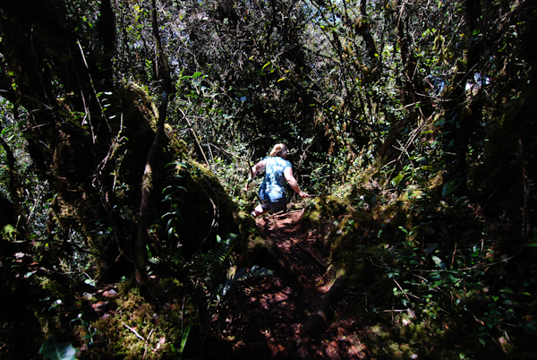 Phillipa in the Moss Forest, Cameron Highlands