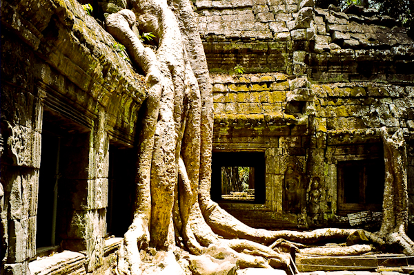 Ta Prohm Trees Cambodia