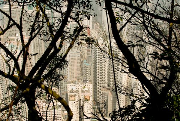 Hong Kong Peak - Victoria Peak - View Through Trees