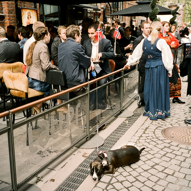 Norway National Day is For Dogs Too