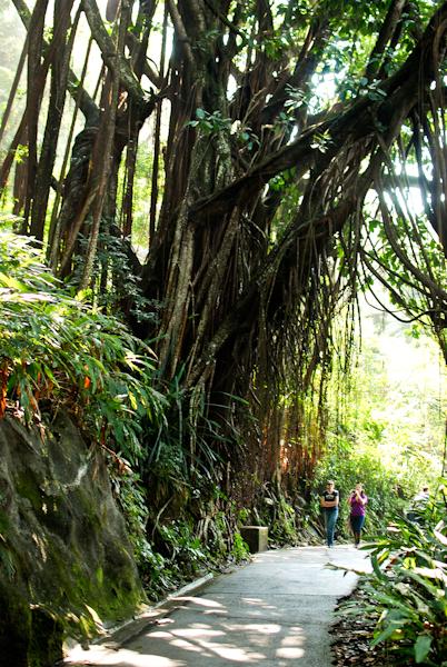 Victoria Peak Hong Kong - Trees