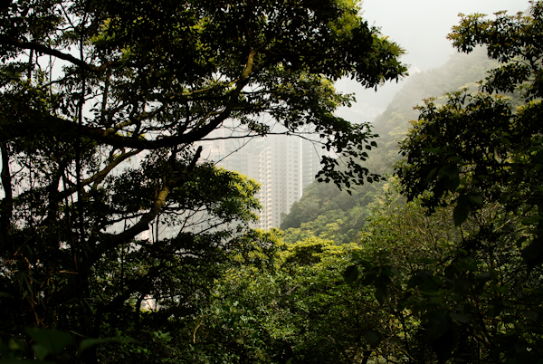 The Peak Hong Kong - View of Skyscrapers Through Trees