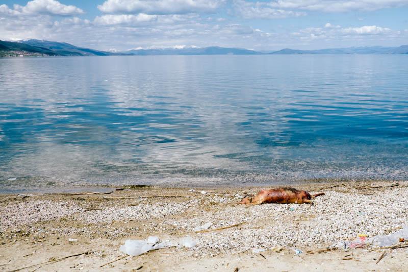 dead dog albania