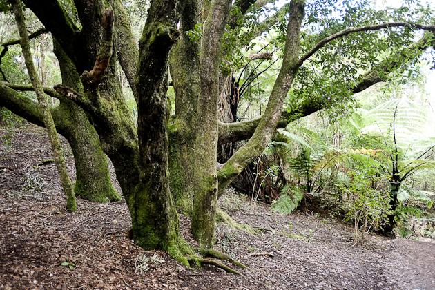 Auckland volcano - Rangitoto
