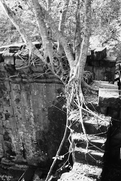 Beng Melea, reclaimed by jungle.