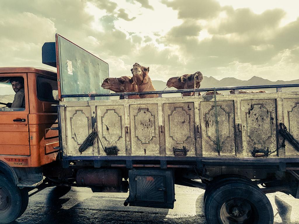 camel burger iran
