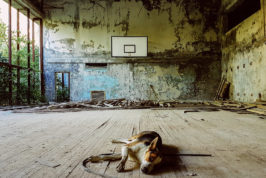 stray dogs that inhabit the radioactive Chernobyl Exclusion