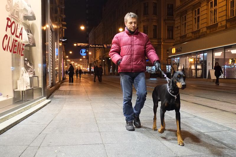 street dog photography - Illica, Zagreb
