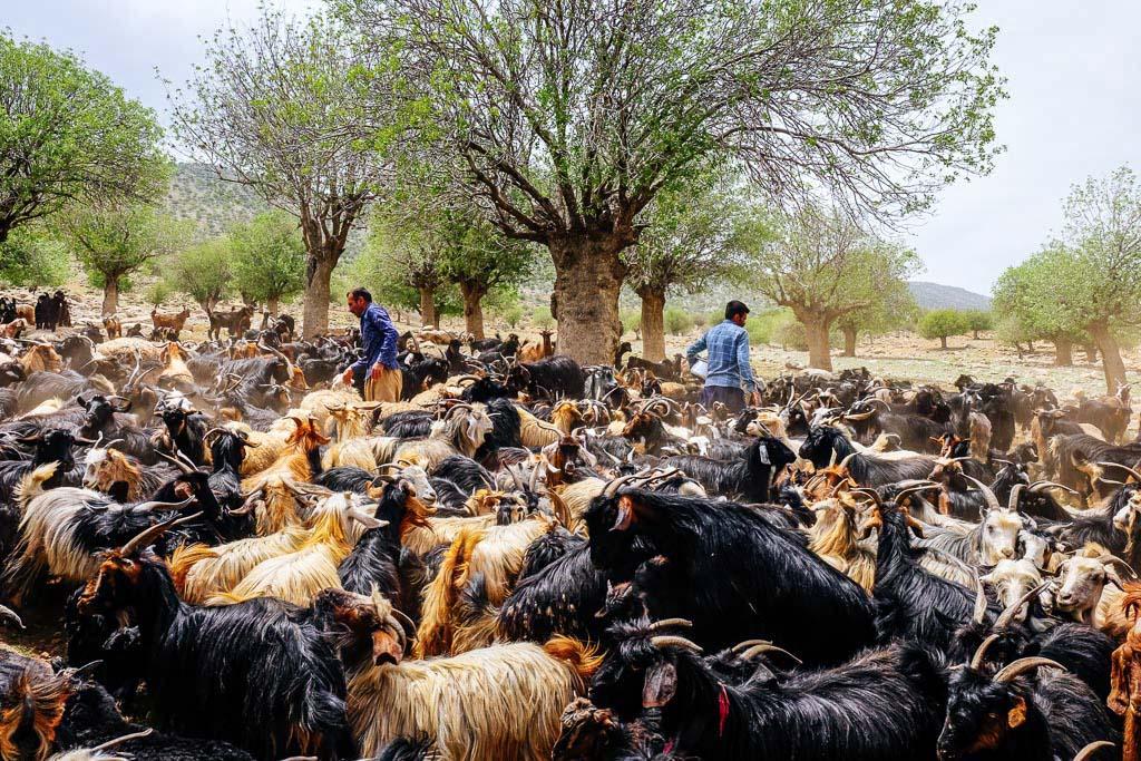 genuine iran nomads