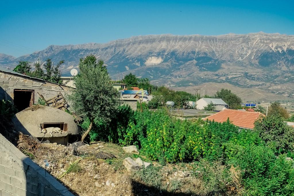 Lazarat marijuana crops in Albania
