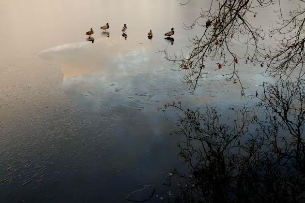 More ducks at Veluwe