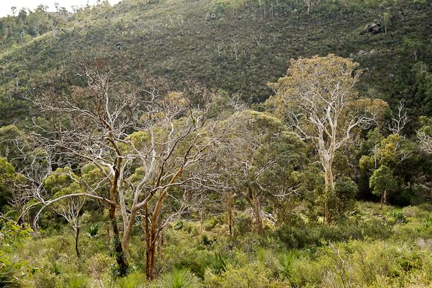 Perth bush