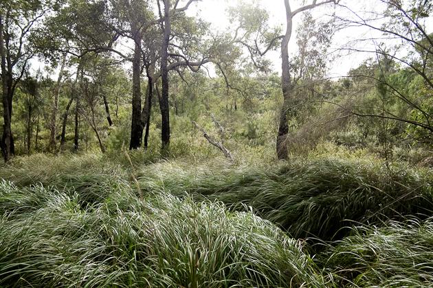 Perth - Lesmurdie Falls