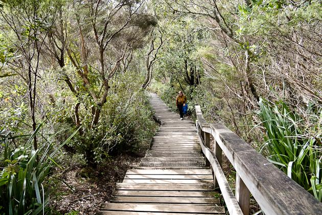 the walk to the Rangitoto Volcano summit