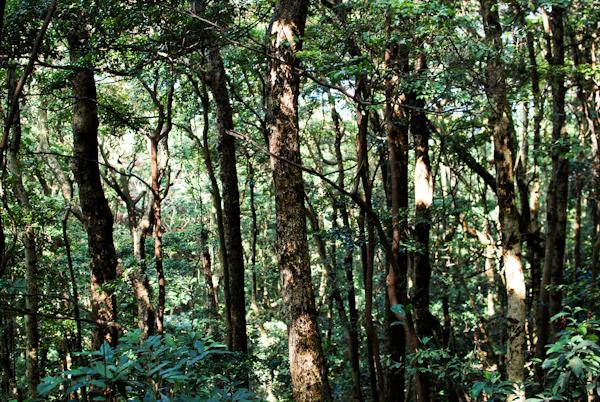 trees - victoria peak hong kong