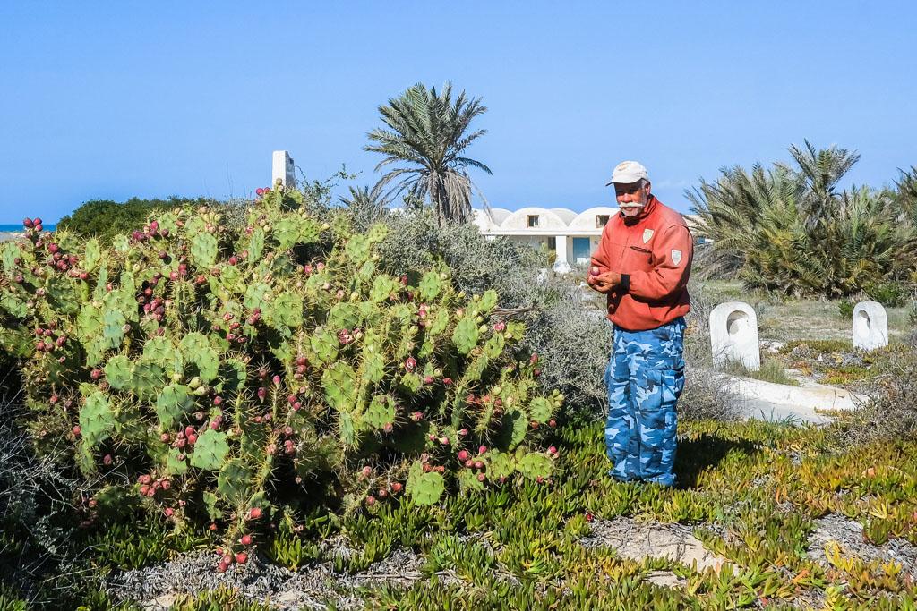 tunisia cactus juice