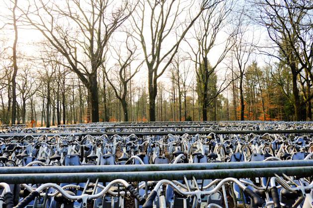 white bicycles veluwe national park